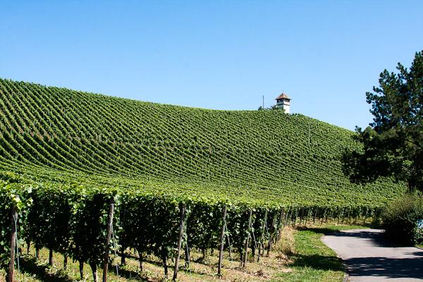 Blick auf einen Weinberg in Meersburg
